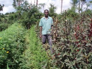 A man standing in a field of Medicinal Plants