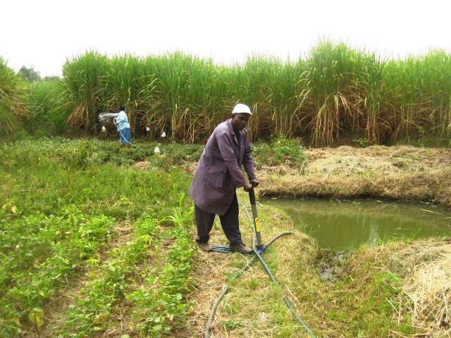 Kajulu Farm