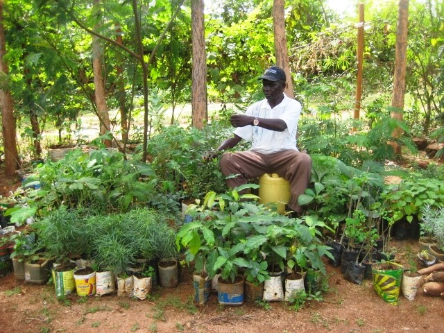 Samual Ouma preparing plants