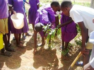 Photo of The Head Girl planting one of the trees from Newsletter April 2017