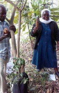 photo of Richard Agiso and Sister Francesca with newly harvested yacón tubers
