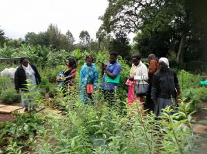 Sr Francisca shows plants in her garden to other participants during Natural Medicines seminar May 2018