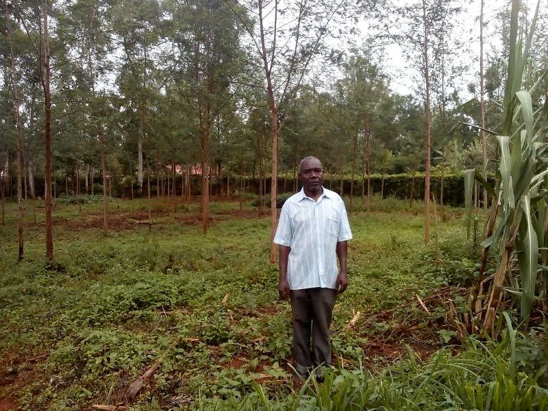 An example of using leguminous trees on his compound to improve the soil