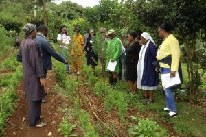 Talking about Plants for natural medicines