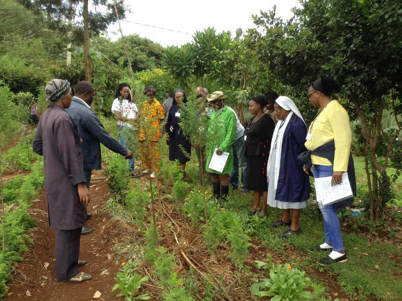 Tour of our Natural Medicine Garden